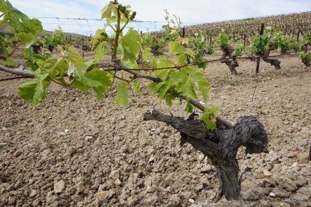 Seminario: El Patrimonio Vinícola del Marco del Jerez