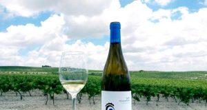 José Estévez presenta Ojo de Gallo, un vino blanco 100% palomino procedente del Pago de Macharnudo
