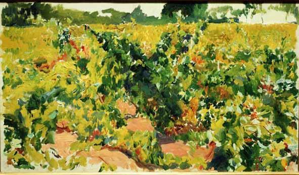 Estudio de viñas, Jerez