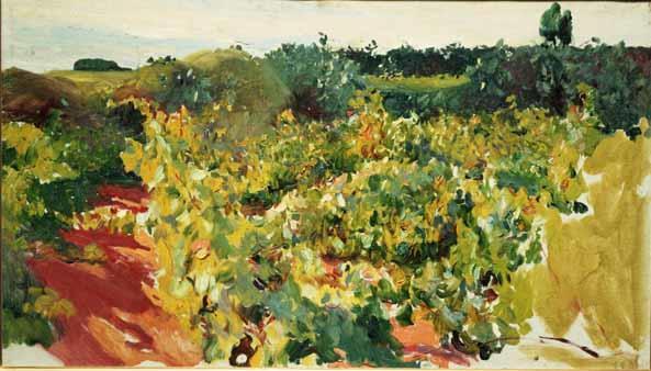 Viñas, Jerez